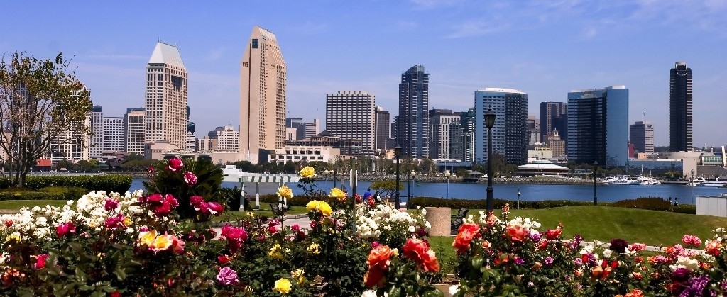city-flowers-cropped